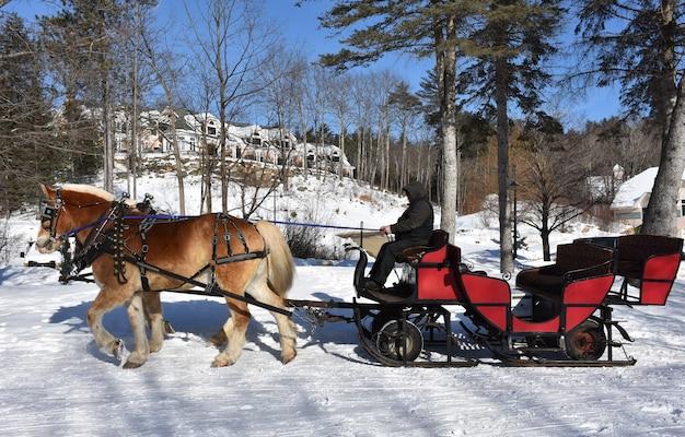 Drużyna koni ciągnących sanie po śniegu
