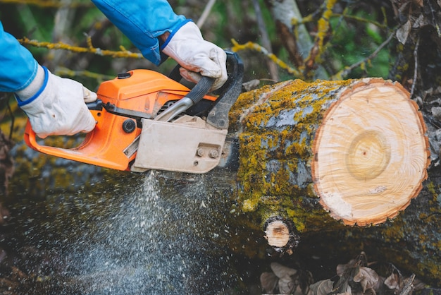 Drwal cięcie starego drewna piłą łańcuchową