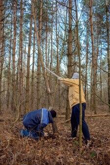 Drwali kłusownicy wycinający las