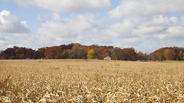 Drzew, lasy rolnicze indiana las jesienią sezony