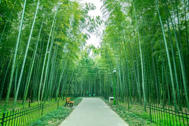 Drzewa bambusowe leśne liście i droga