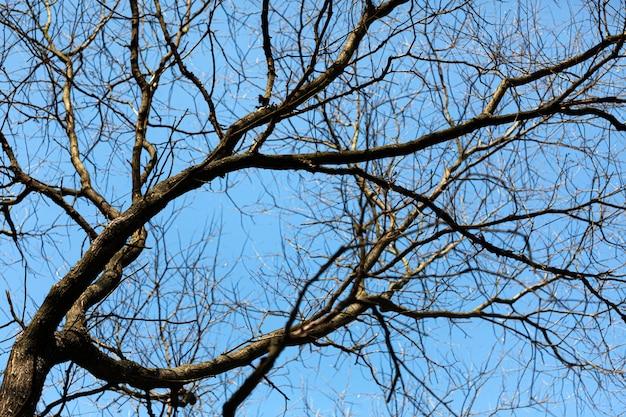 Drzewa bez liści na niebieskim niebie
