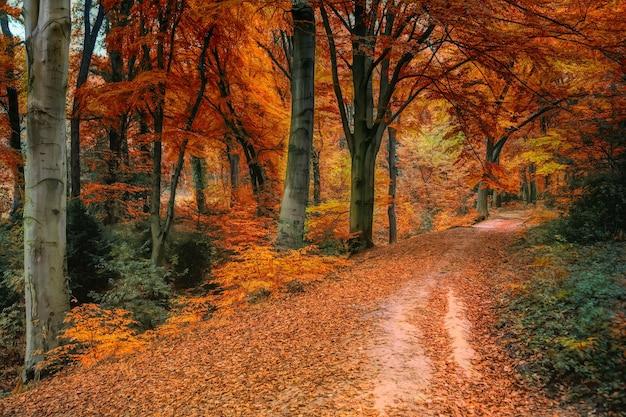 Drzewa brązowe i pomarańczowe