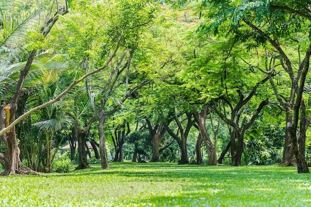 Drzewa, gałęzie, liście i trawniki są w lesie