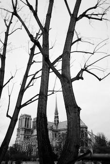 Drzewa i dwór w czerni i bieli