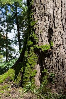 Drzewa i inne rośliny