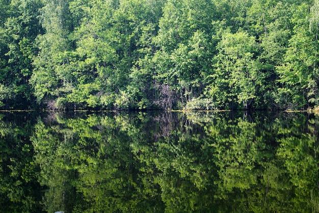 Drzewa i krzewy w tle odbijające się w linii brzegowej jeziora leśnego pośrodku zdjęcia