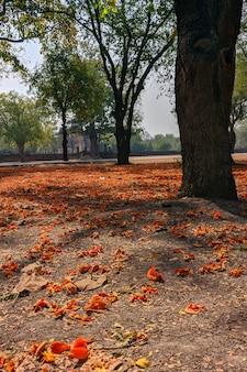 Drzewa i kwiaty na ziemi w historycznym parku sukhothai w tajlandii