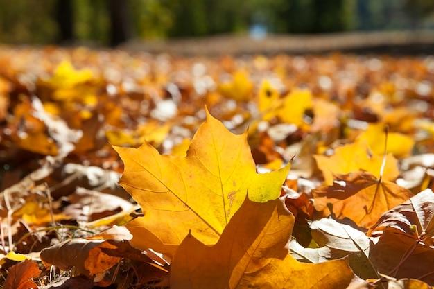 Drzewa i liście jesienią