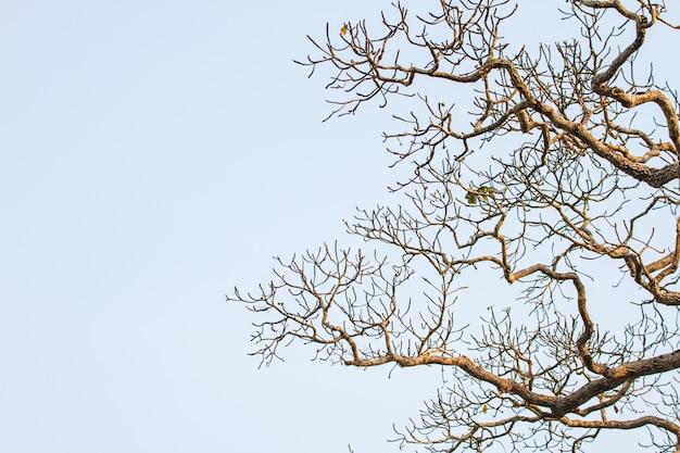 Drzewa i niebieskiego nieba tło