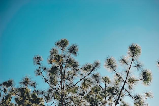Drzewa i niebo występują naturalnie. zielony i niebieski formułowany w naturalnej formie.