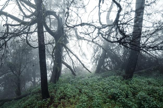 Drzewa i paprocie w deszczowy dzień zielony las