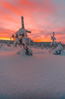 Drzewa i pole pokryte śniegiem pod niesamowitym kolorowym niebem w norwegii
