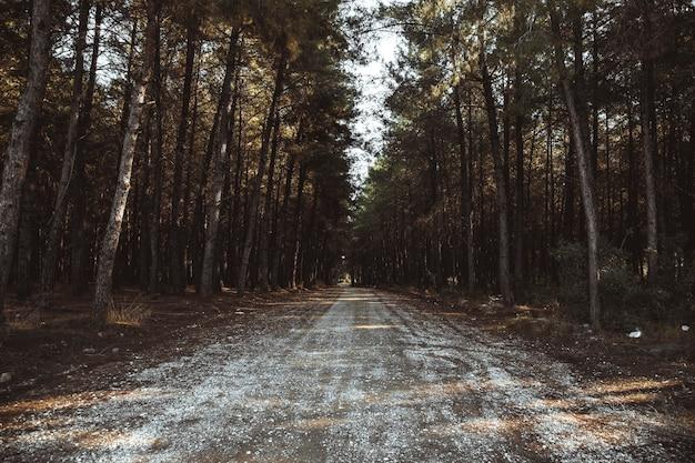 Drzewa i polna droga w lesie