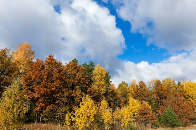 Drzewa i przyroda jesienią roku, pożółkła roślinność i drzewa