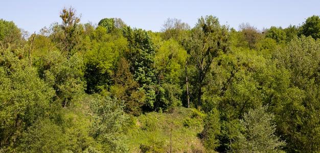 Drzewa i rośliny przy słonecznej pogodzie, latem lub wiosną w parku lub w lesie