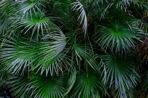 Drzewa i rośliny w ogrodzie botanicznym. gęsta zielona roślinność w ogrodzie botanicznym. teneryfa hiszpania.
