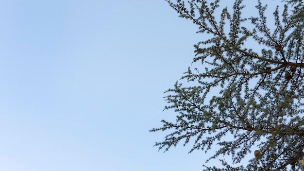Drzewa i tła leśne