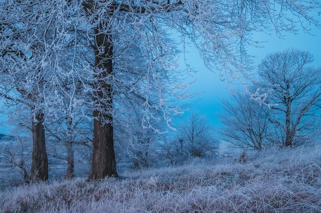 Drzewa i trawa w lesie wczesnym rankiem przed świtem w ciemnoniebieskim kolorze, szkocja, wielka brytania