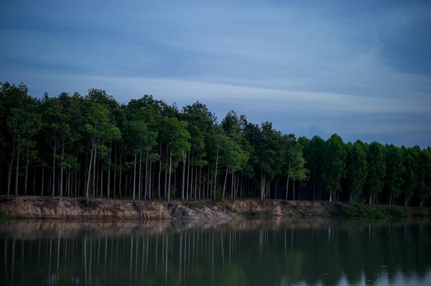 Drzewa i woda, naturalne obszary w ciemności i zimą.