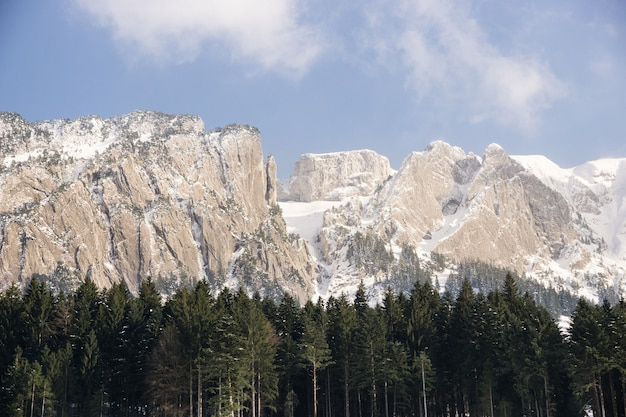 Drzewa i zaśnieżone góry w oddali w ciągu dnia