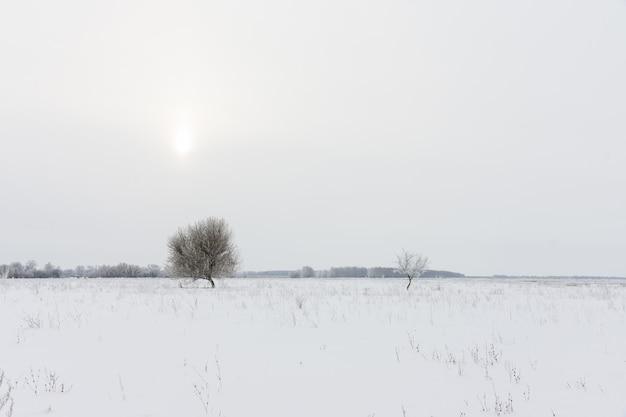 Drzewa i zimowy krajobraz