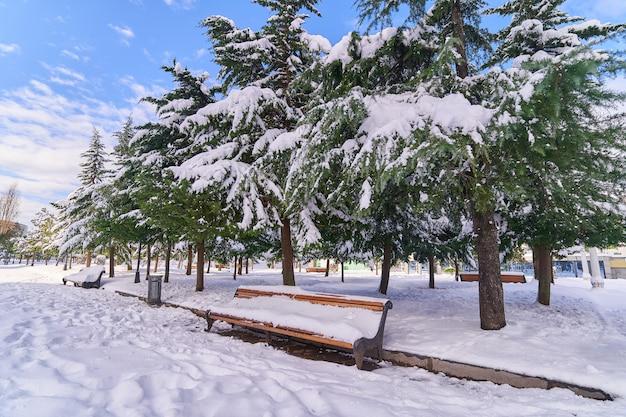 Drzewa iglaste i drewniane ławki pokryte śniegiem w parku