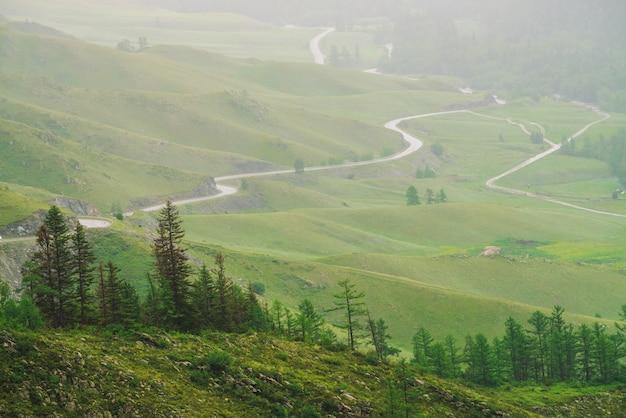 Drzewa iglaste na tle wężowatej drogi w górzystym terenie, w otoczeniu gęstej mgły.