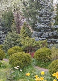 Drzewa iglaste w ogrodzie: świerk, żywopłot, sosna, jodła, jałowiec.