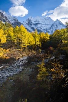 Drzewa jesienią z żółtymi i zielonymi liśćmi