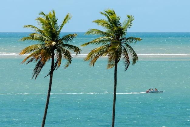 Drzewa kokosowe na plaży camboinha cabedelo w pobliżu joao pessoa paraiba brazylia 2 czerwca 2012