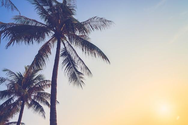Drzewa kokosowego wenecja efekt san
