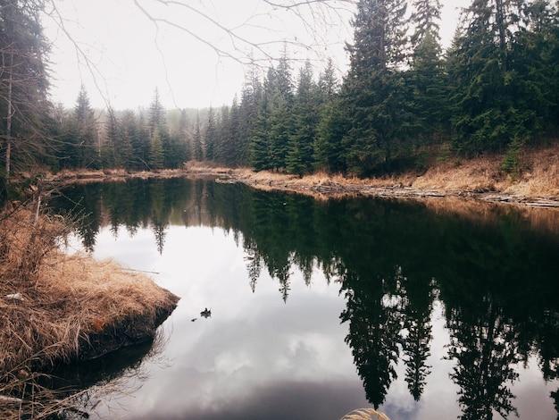 Drzewa lasu w pobliżu jeziora i odbite w przezroczystej wodzie
