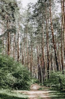 Drzewa leśna droga widzi gęste światło z nieba świeżego powietrza