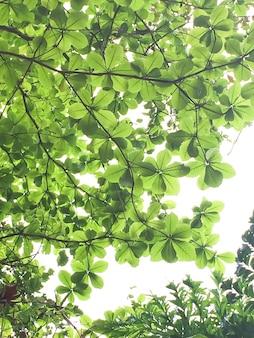 Drzewa leśne. charakter zielone tło światła słonecznego drewna. miękki ton