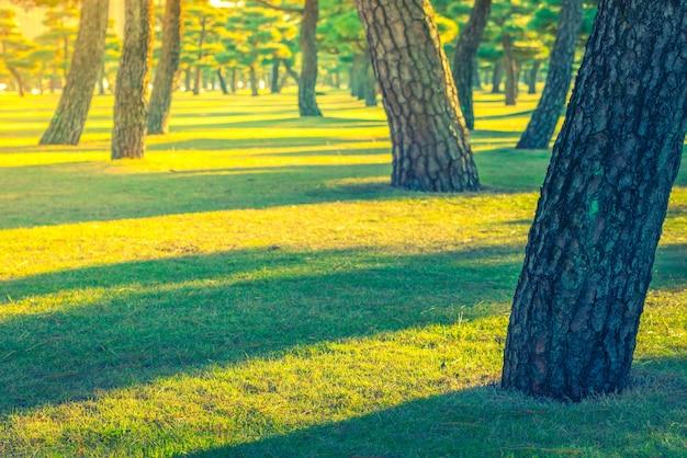 Drzewa leśne (filtrowany obraz przetwarzany rocznika efekt.)