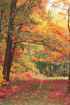 Drzewa leśne jesienią z efektem filtra