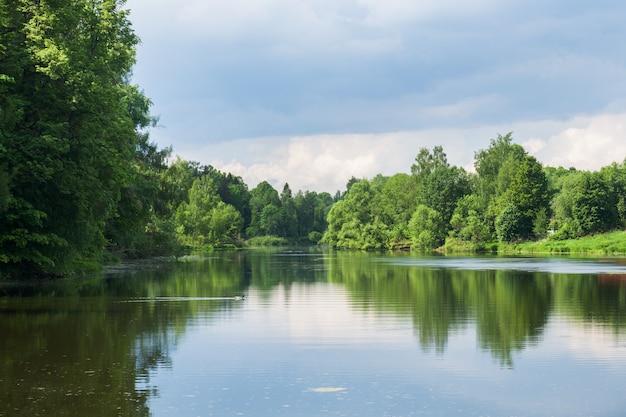 Drzewa leśne na brzegu rzeki. odbicie w rzece w słoneczny letni dzień.