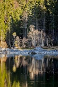 Drzewa leśne na frillensee (małe jezioro w pobliżu eibsee), niemcy