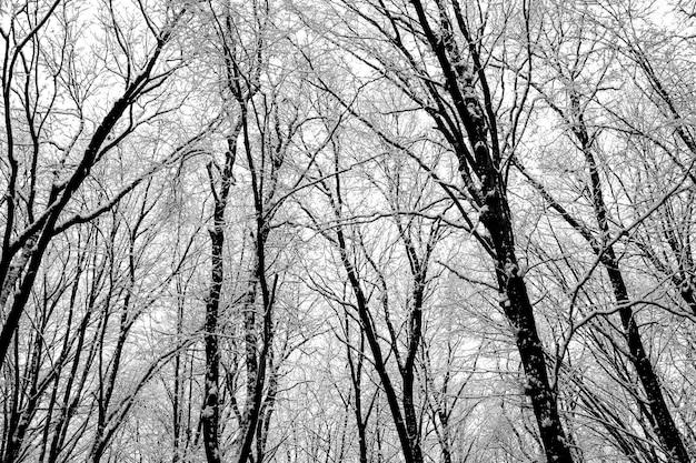 Drzewa leśne. natura śnieg drewna tła. zima