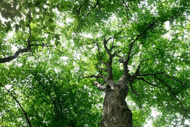 Drzewa leśne. natura zielone drewno światło słoneczne tła