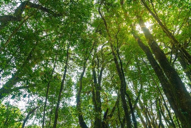 Drzewa leśne. natura zielone światło słoneczne drewna i niebo