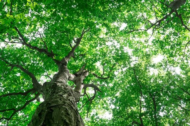 Drzewa leśne natura zielone światło słoneczne drewna tła