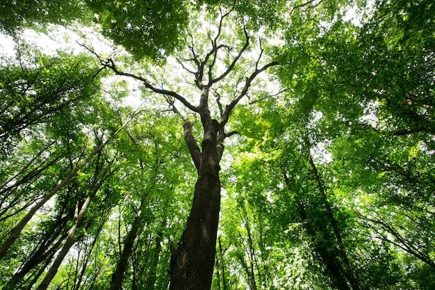 Drzewa leśne. natura zielone światło słoneczne drewna