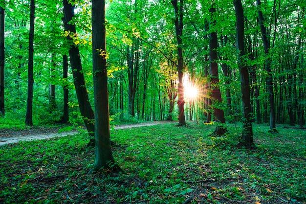 Drzewa leśne. natura zielony drewno światło słoneczne tła