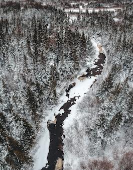 Drzewa leśne w fotografii zimowej