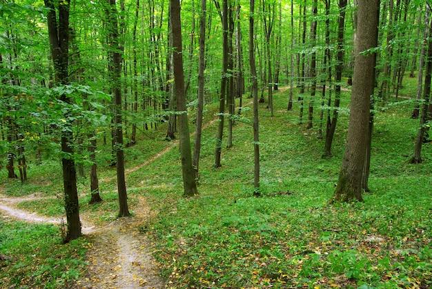 Drzewa leśne