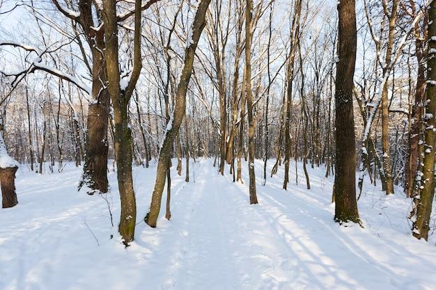 Drzewa liściaste bez liści w sezonie zimowym, nagie drzewa pokryte śniegiem po opadach śniegu i zamieci