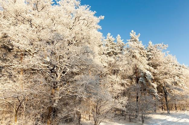 Drzewa liściaste bez liści w sezonie zimowym sezon zimowy ze śniegiem w parku lub w lesie mroźna zima w parku lub w lesie podczas mrozów