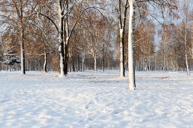 Drzewa liściaste bez liści zimą.